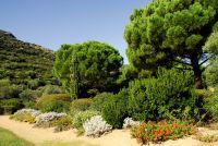 Der botanische Garten wurde in einem kleinen Tal angelegt und zeigt über 2000 Arten von  Büschen, Blumen und Bäumen aus allen Kontinenten