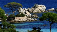 Die pittoreske Schirmpinie mit der Granitsteinmauer auf der Landzunge Punta di Colombara, die den Strand von Tamaricciu im Süden begrenzt, ist ein echtes Postkartenmotiv.