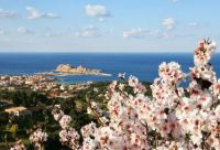 Mandelblüte - Blick auf L'Ile Rousse