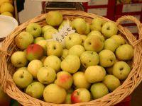 Knackige, kleine Äpfel aus dem Prunelli-Tal bei Ajaccio